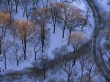 Trees Tipped with Sunlight in Snow-Covered Central Park Photographic Print by Melissa Farlow