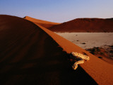A Snake on a Sand Dune Photographic Print by Chris Johns