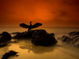 A Cormorant Lands on a Rock on the Cornish Coastline Photographic Print by Josh Exell