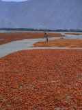 A Farmer Turns His Crop of Peppers to Ensure Even Drying and Curing Photographic Print by Bates Littlehales