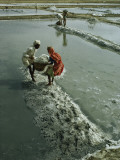 Workers Haul Salt from Evaporation Pans to Be Used in Chemicals Photographic Print by Robert Sisson