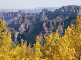 Fall Colors on the North Rim in Early Morning Sunlight Lámina fotográfica por Justin Locke