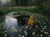 A Placid Pool Reflects El Capitan in Yosemite National Park Photographic Print by Melissa Farlow