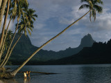 Coconut Palms Lean over Moorea's Tranquil Waters Photographic Print by Luis Marden
