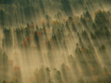 Aerial View of Autumn-Hued Forest with Morning Fog Fotografisk tryk af Michael Melford
