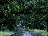 Sugar Maples Shade a Quite Country Road on the Gonyaw Farm in Summer Photographic Print by Michael S. Yamashita