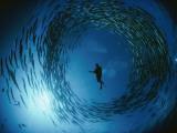 En naturalist omringet af en stime roterende barracudaer Fotografisk tryk af David Doubilet