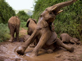 Elephants Taking a Mud Bath Photographic Print by Michael Nichols