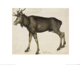 Elk Giclee Print by Albrecht Dürer