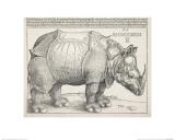 The Rhinoceros Giclée-Druck von Albrecht Dürer