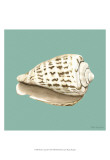 Shell on Aqua II Prints by Megan Meagher