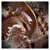 Macro Shells IV Prints by Rachel Perry