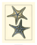 Antique Blue Starfish II Posters