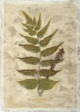 Fern Fresco III Giclee Print by Edward Lowe