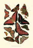 Red Butterfly Study Prints