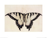 Tiger Swallowtail Butterfly Giclee Print by John White
