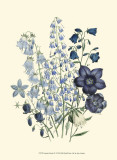Loudon Florals IV Poster by Jane W. Loudon