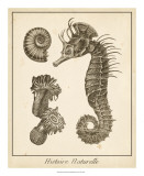 Seahorse Study I Posters