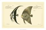 Antique Fish IV Giclee Print by Marcus Elieser Bloch