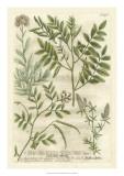 Weinmann's Garden II Giclee Print by Johann Weinmann