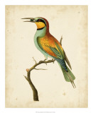 Nodder Tropical Bird I Giclee Print by Frederick P. Nodder