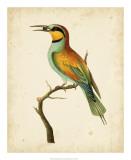 Nodder Tropical Bird I Poster by Frederick P. Nodder
