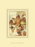 The Beechnut Fairy Prints