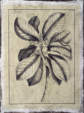 Embellished Antique Foliage II Giclee Print by Pierre-Joseph Buchoz