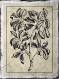 Embellished Antique Foliage I Giclee Print by Pierre-Joseph Buchoz