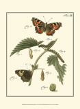 Butterfly Metamorphosis I Posters