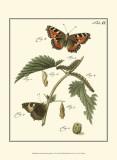 Butterfly Metamorphosis I Posters