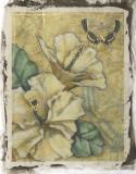 Hibiscus Medley II Giclee Print by Jennifer Goldberger