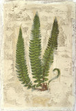 Fern Fresco I Giclee Print by Edward Lowe