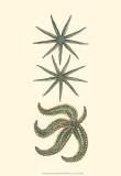 Aquamarine Starfish II Posters