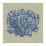 Chambray Coral III Giclee Print