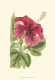 Antique Hibiscus I Posters by  Drake