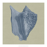 Chambray Shells I Posters