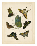 Antique Entomology I Giclee Print