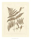 Sepia Ferns I Giclee Print