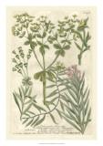 Weinmann's Garden III Giclee Print by Johann Wilhelm Weinmann