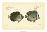 Antique Fish V Giclee Print by Marcus Elieser Bloch