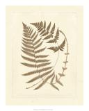 Sepia Ferns V Giclee Print