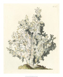 Antique Coral I Giclee Print