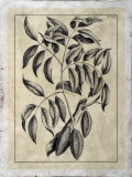 Embellished Antique Foliage III Giclee Print by Pierre-Joseph Buchoz