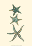 Aquamarine Starfish I Posters