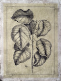 Embellished Antique Foliage IV Giclee Print by Pierre-Joseph Buchoz