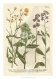 Weinmann's Garden VI Giclee Print by Johann Weinmann
