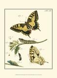 Butterfly Metamorphosis III Posters