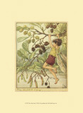 The Alder Fairy Poster