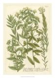 Weinmann's Garden V Giclee Print by Johann Wilhelm Weinmann